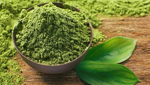 Экстракт зеленого чая: польза
